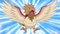 Spearow anime.png