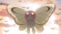 A wild Butterfree