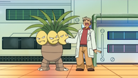 Professor Oak Lecture DP121.png