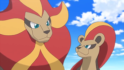 Pyroar gender difference anime.png