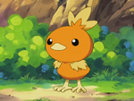 May Torchic.png